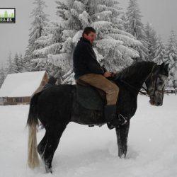 ergela-tara-jahanje-konja-kaludjerske-bare (4)