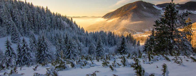 planina-tara-zimovanje (10)