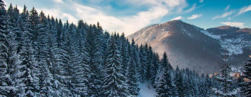 planina-tara-zimovanje (23)