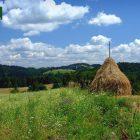 racanska-sljivovica-planina-tara (6)