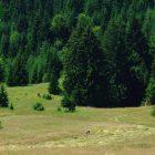 racanska-sljivovica-planina-tara (7)
