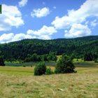 racanska-sljivovica-planina-tara (8)