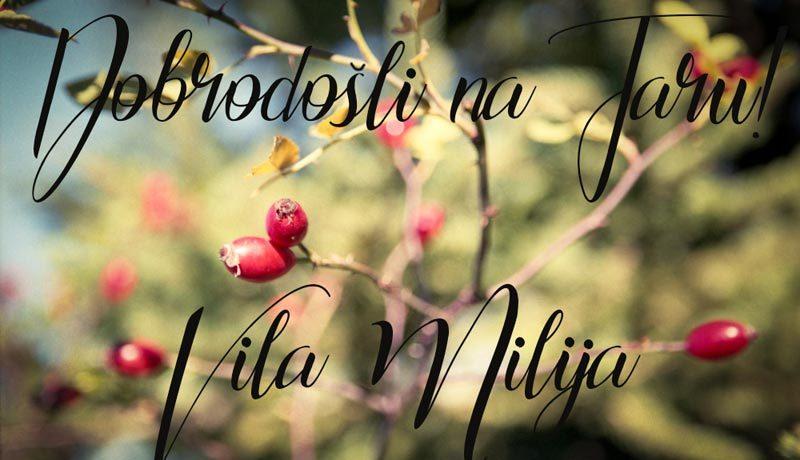 vila-milija-tara-racanska-sljivovica-s2