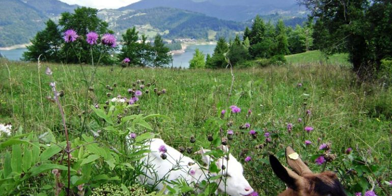 konaci-zaovljanska-jezera-tara-s6