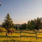 ergela-tara-jahanje-konja-kaludjerske-bare (3)