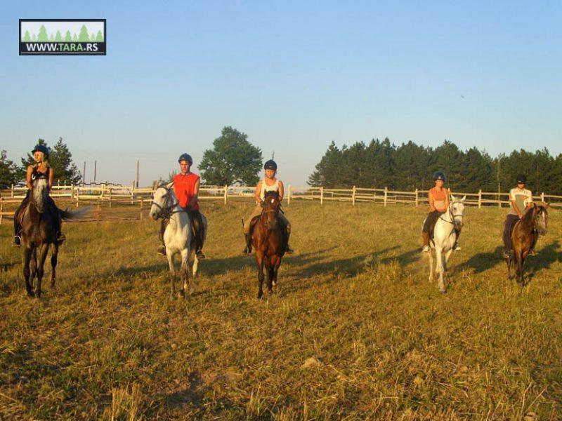 ergela-tara-jahanje-konja-kaludjerske-bare (6)