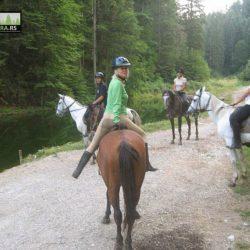 ergela-tara-jahanje-konja-kaludjerske-bare (7)