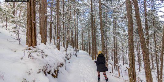 planina-tara-zimovanje (1)