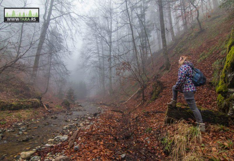 planina-tara-planinarenje-pesacke-staze (6)