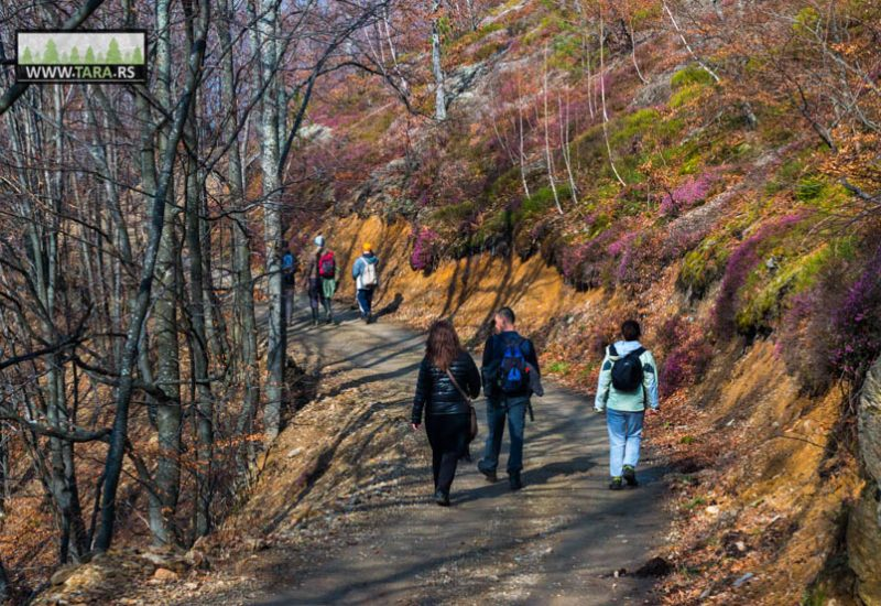 planina-tara-planinarenje-pesacke-staze (7)
