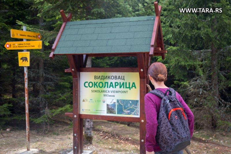 tara-vidikovac-sokolarica- (2)