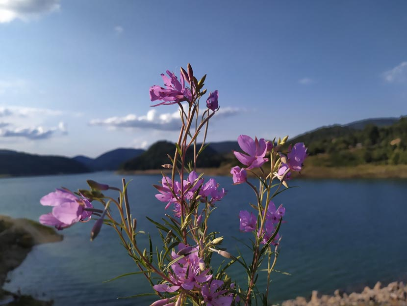 28-jezero-sa-cvecem