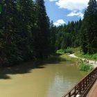 racanska-sljivovica-planina-tara (10)