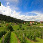 racanska-sljivovica-planina-tara (2)
