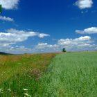 racanska-sljivovica-planina-tara (5)